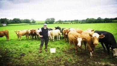 TKDK Hayvancılık Hibe Desteği Nasıl Alınır?