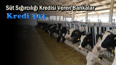 Süt Sığırcılığı Kredisi Veren Bankalar
